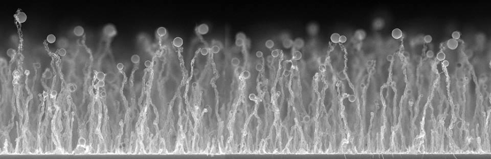 أسلاك السليكا النانوية